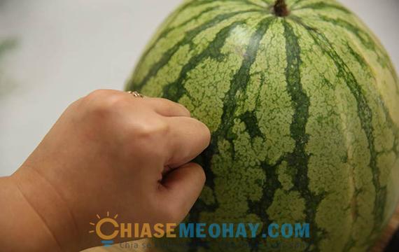 Vỗ lên thân quả dưa hấu